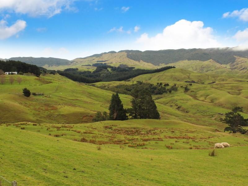 524 Towai Road, Dannevirke, Tararua - NZL (photo 1)